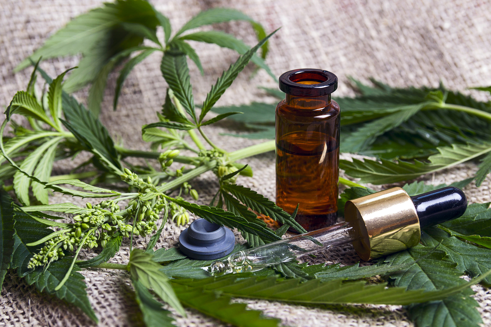 Finding What Works for You: What to Look for When Buying CBD Oil