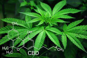 CBD formula and cannabis plant