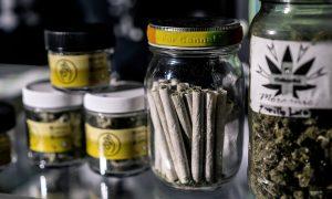 Cannabis rolls in a jar