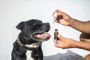 Pet CBD Oil